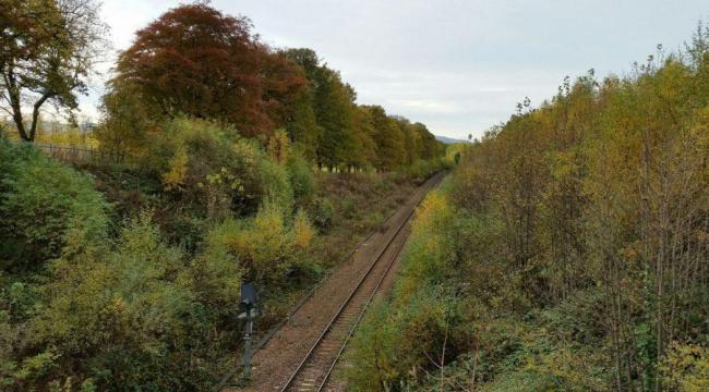Trees and vegetation will be removed along a stretch of the Glasgow to East Kilbride line.