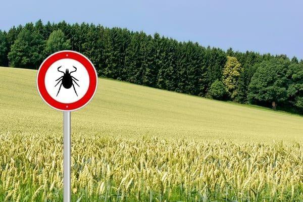 Walkers advised to beware of ticks when in countryside