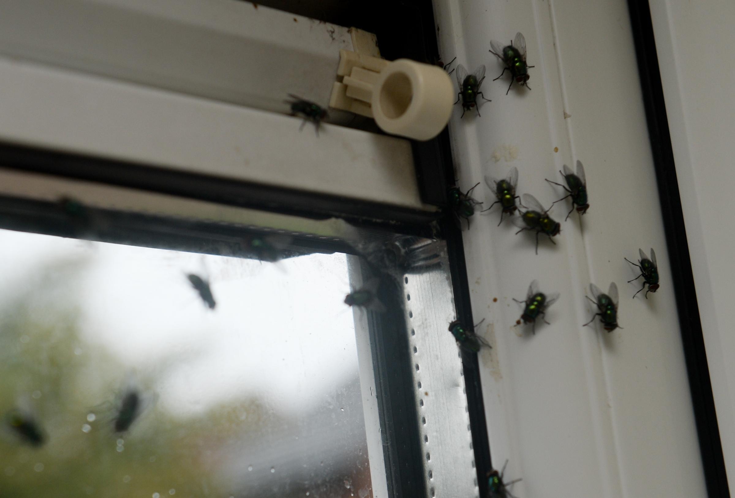 Flies were found in a number of homes across East Renfrewshire
