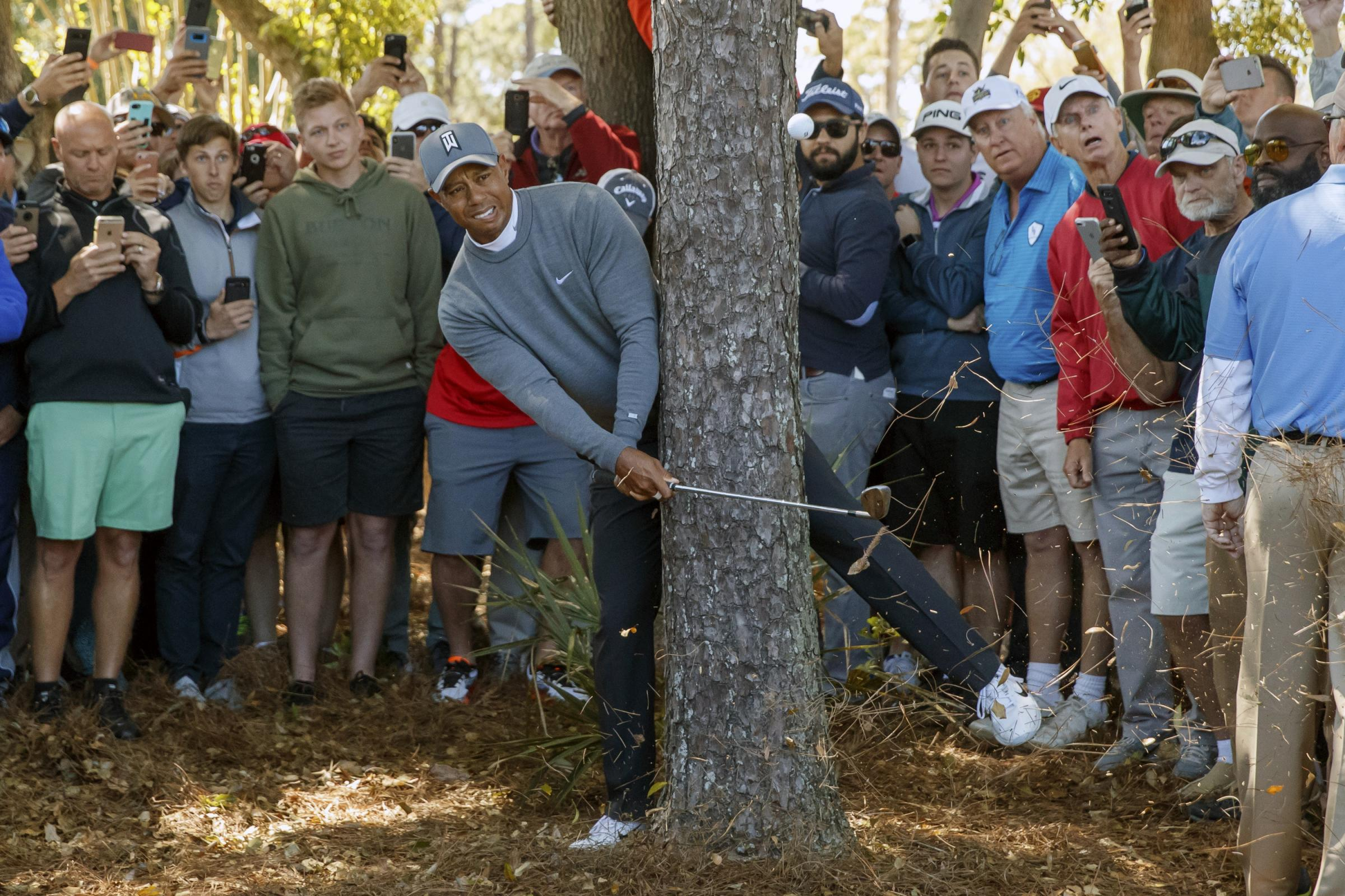 Tiger Woods finds trouble near a tree (Mike Carlson/AP)