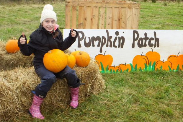 Hallowe'en pumpkin bash proves popular with punters