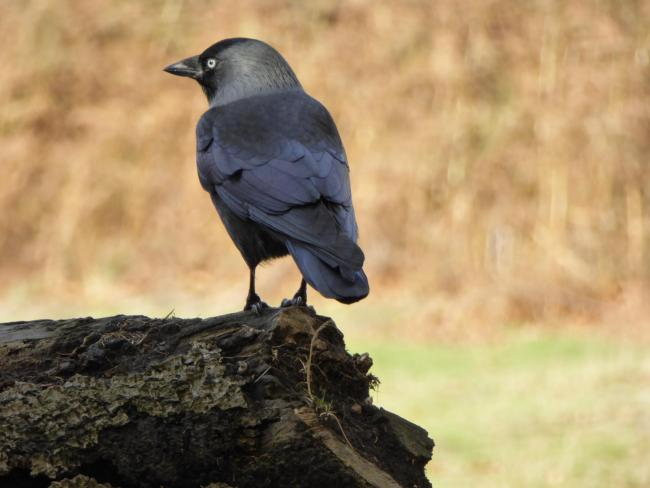 Fed-up villagers call for action to scare off feathered 'fiends'